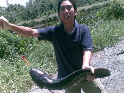 snakefish.jpg
